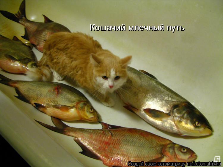 Котоматрица: Кошачий млечный путь