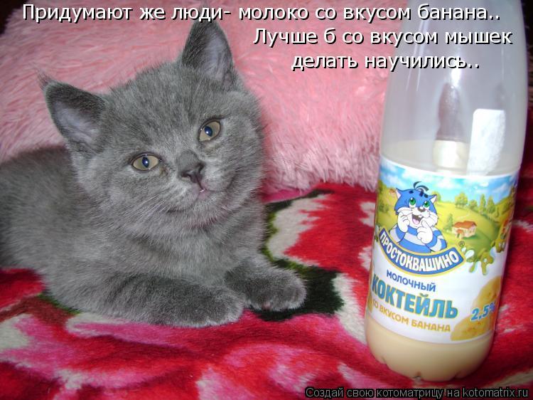 Котоматрица: Придумают же люди... Придумают же люди- молоко со вкусом банана.. Лучше б со вкусом мышек делать научились..