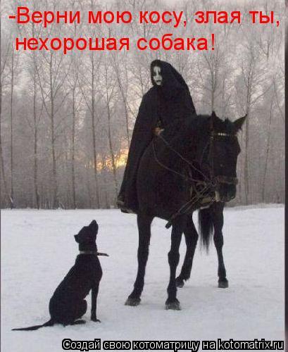Котоматрица: -Верни мою косу, злая ты, нехорошая собака!