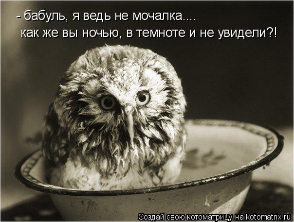 Котоматрица: - бабуль, я ведь не мочалка.... как же вы ночью, в темноте и не увидели?!