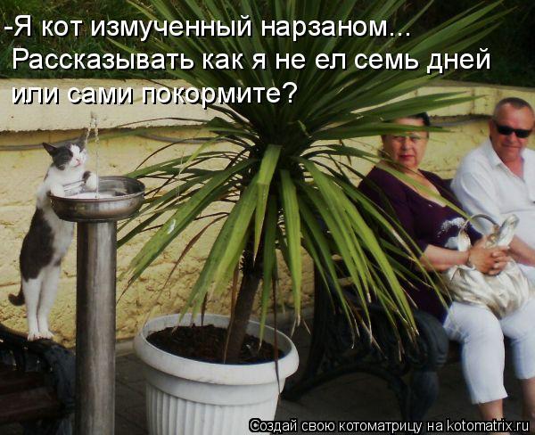 Котоматрица: -Я кот измученный нарзаном... Рассказывать как я не ел семь дней или сами покормите?