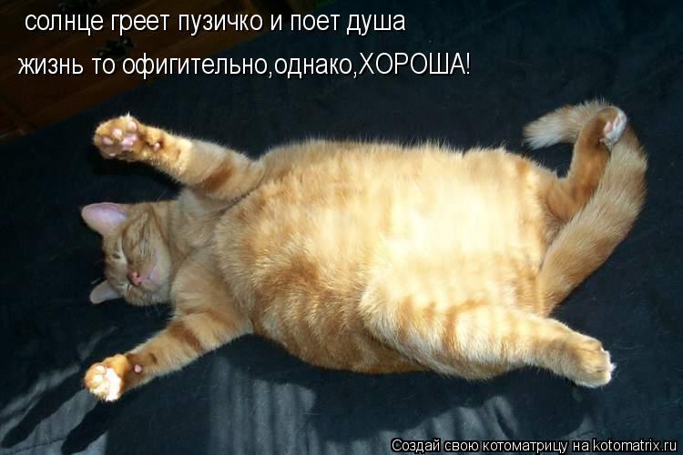 Котоматрица: солнце греет пузичко и поет душа жизнь то офигительно,однако,ХОРОША!