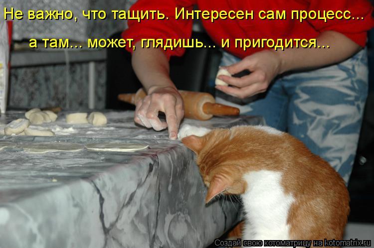 Котоматрица: Не важно, что тащить. Интересен сам процесс...  а там... может, глядишь... и пригодится...