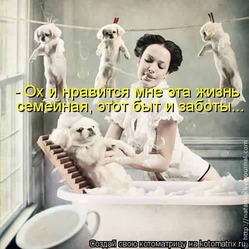 Котоматрица: - Ох и нравится мне эта жизнь  семейная, этот быт и заботы...