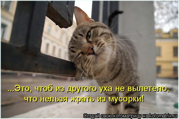 Котоматрица: ...Это, чтоб из другого уха не вылетело, что нельзя жрать из мусорки!