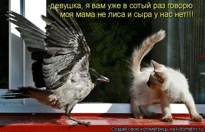 Котоматрица: -девушка, я вам уже в сотый раз говорю моя мама не лиса и сыра у нас нет!!!