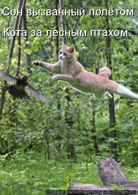 Котоматрица: Сон вызванный полётом Кота за лесным птахом....