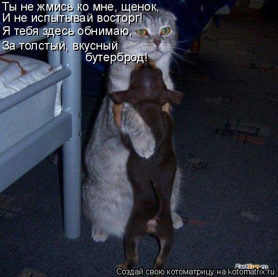 Котоматрица: Ты не жмись ко мне, щенок, И не испытывай восторг! Я тебя здесь обнимаю, За толстый, вкусный  бутерброд!