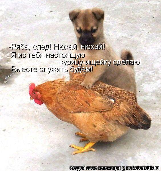 -Ряба, след! Нюхай, нюхай! Я из тебя настоящую курицу-ищейку сделаю! В