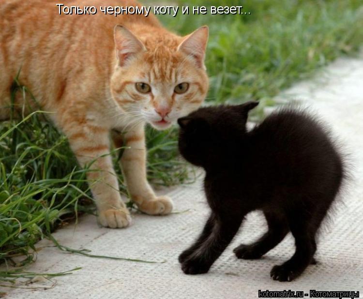 Котоматрица: Только черному коту и не везет...