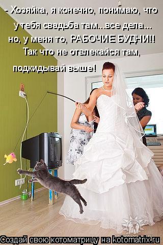Котоматрица: - Хозяйка, я конечно, понимаю, что  у тебя свадьба там...все дела...  но, у меня то, РАБОЧИЕ БУДНИ!! Так что не отвлекайся там,  подкидывай выше!