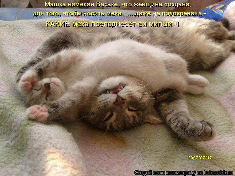 Котоматрица: для того, чтобы носить меха.......даже не подозревала -  Машка намекая Ваське, что женщина создана,  КАКИЕ меха преподнесёт ей милый!!!