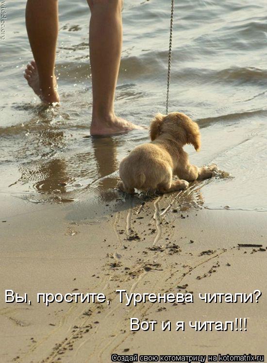 Котоматрица: Вы, простите, Тургенева читали? Вот и я читал!!!