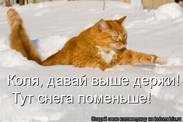 Котоматрица: Тут снега поменьше! Коля, давай выше держи!