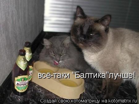 "Котоматрица: всё-таки ""Балтика""лучше!"