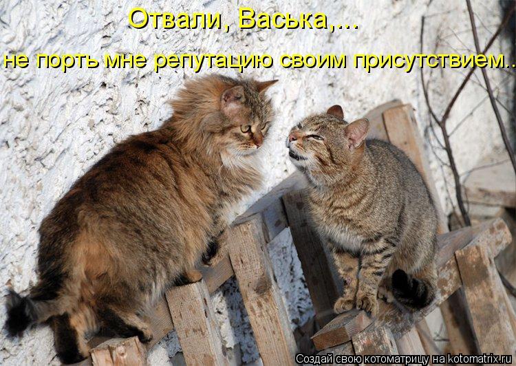 Котоматрица: не порть мне репутацию своим присутствием...  Отвали, Васька,...