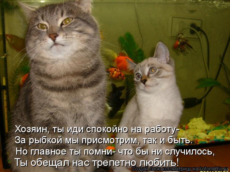 Котоматрица: Ты обещал нас трепетно любить! Но главное ты помни- что бы ни случилось, За рыбкой мы присмотрим, так и быть. Хозяин, ты иди спокойно на работу