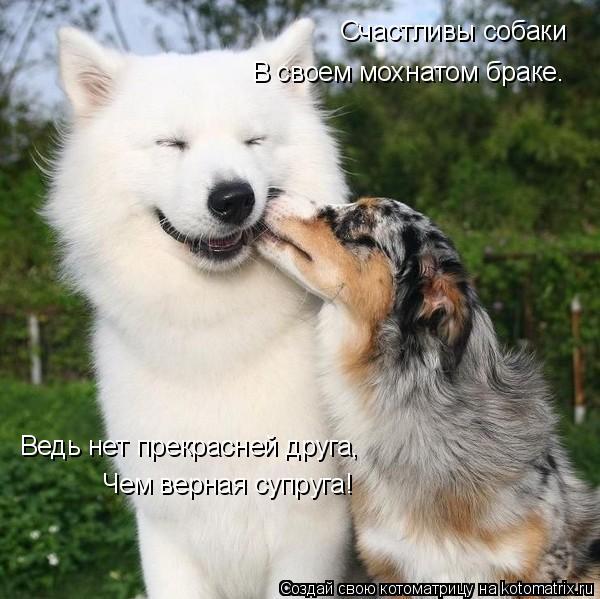 Котоматрица: Счастливы собаки В своем мохнатом браке. Ведь нет прекрасней друга, Чем верная супруга!