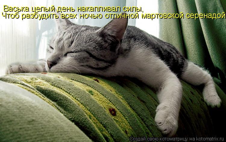 Котоматрица: Васька целый день накапливал силы, Чтоб разбудить всех ночью отличной мартовской серенадой….