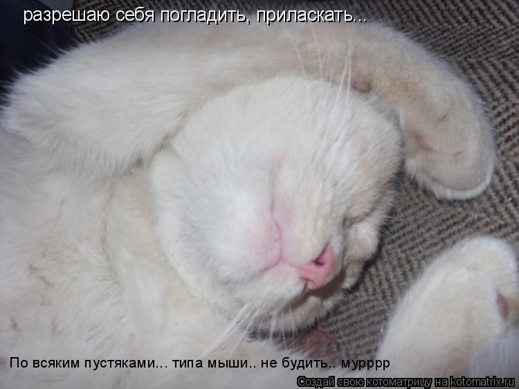 Котоматрица: разрешаю себя погладить, приласкать... По всяким пустяками... типа мыши.. не будить.. мурррр