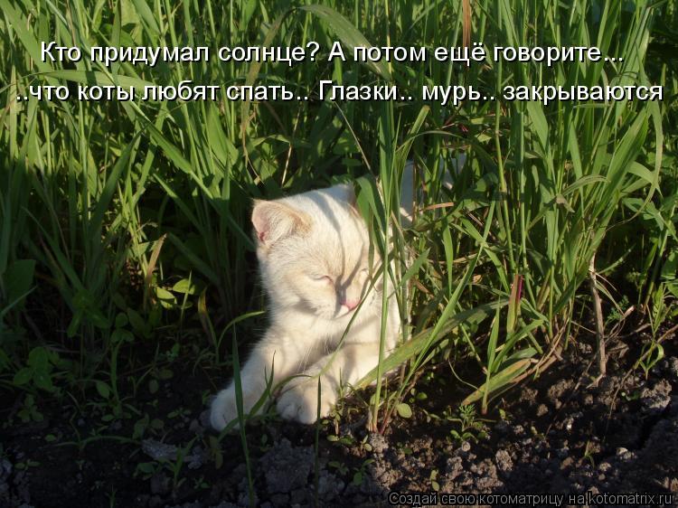 Котоматрица: Кто придумал солнце? А потом ещё говорите... ..что коты любят спать.. Глазки.. мурь.. закрываются