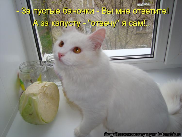 """Котоматрица: - За пустые баночки - Вы мне ответите! А за капусту - """"отвечу"""" я сам!.."""