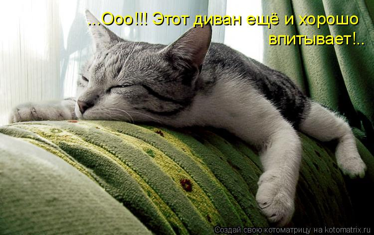 Котоматрица: ...Ооо!!! Этот диван ещё и хорошо впитывает!..