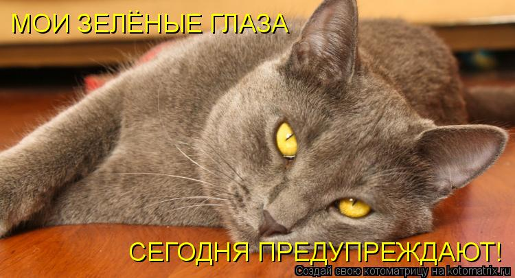 Котоматрица: МОИ ЗЕЛЕНЫЕ ГЛАЗА  СЕГОДНЯ ПРЕДУПРЕЖДАЮТ! ..