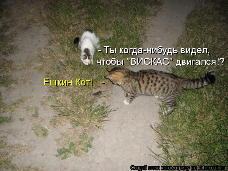 """Котоматрица: - Ты когда-нибудь видел, чтобы """"ВИСКАС"""" двигался!? Ешкин Кот!.. -"""