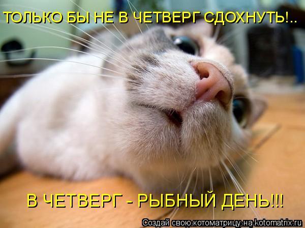 Котоматрица: ТОЛЬКО БЫ НЕ В ЧЕТВЕРГ СДОХНУТЬ!.. В ЧЕТВЕРГ - РЫБНЫЙ ДЕНЬ!!!