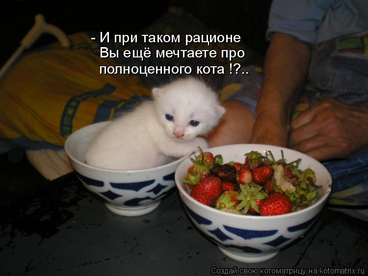 Котоматрица: - И при таком рационе Вы ещё мечтаете про полноценного кота !?..