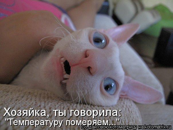 """Котоматрица: Хозяйка, ты говорила: """"Температуру померяем..."""""""