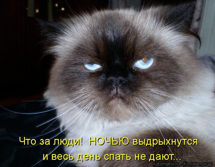 Котоматрица: Что за люди!  НОЧЬЮ выдрыхнутся и весь день спать не дают...