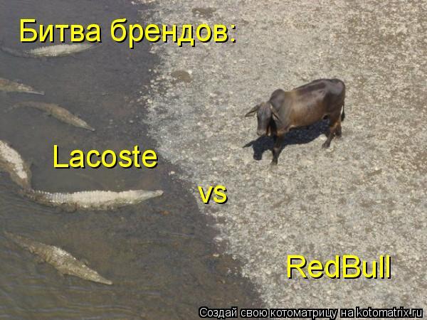 Котоматрица: Битва брендов: Lacoste vs RedBull