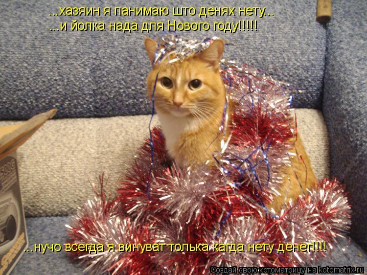Котоматрица: ...хазяин я панимаю што денях нету... ...и йолка нада для Нового году!!!!! ...нучо всегда я винуват толька кагда нету денег!!!!