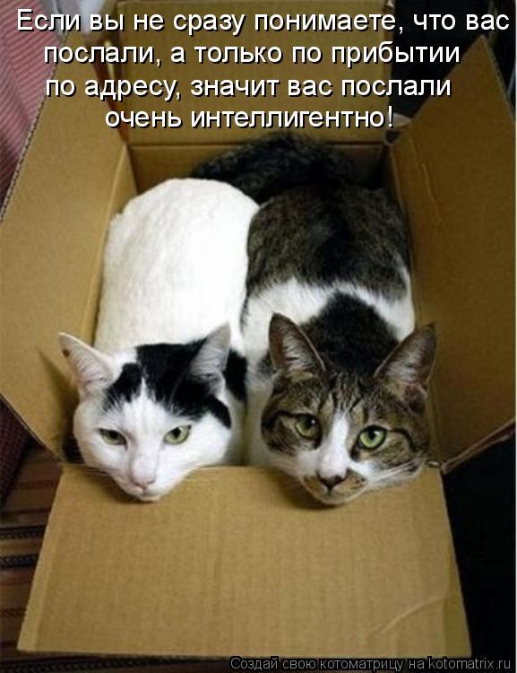 Котоматрица: Если вы не сразу понимаете, что вас послали, а только по прибытии по адресу, значит вас послали очень интеллигентно!