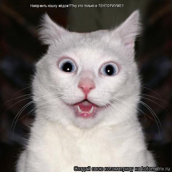 Котоматрица: Накормить кошку мёдом!??ну это только в ТЕНТОРИУМЕ!!