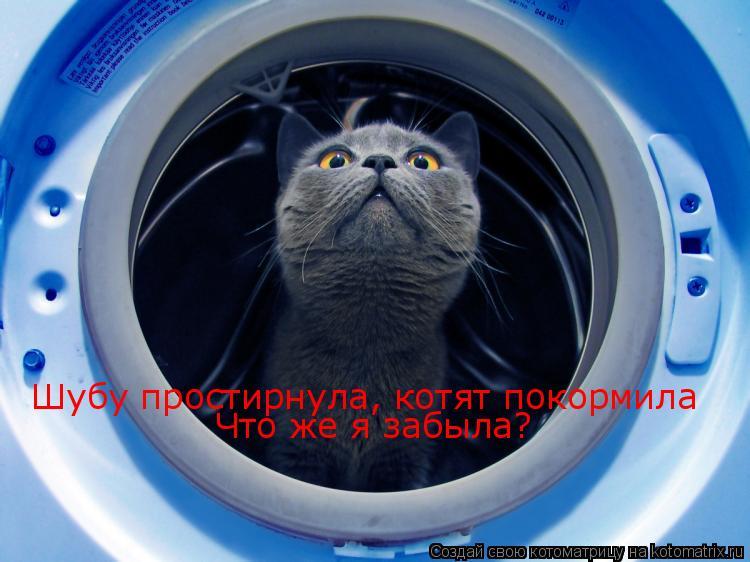 Котоматрица: Шубу простирнула, котят покормила Что же я забыла?