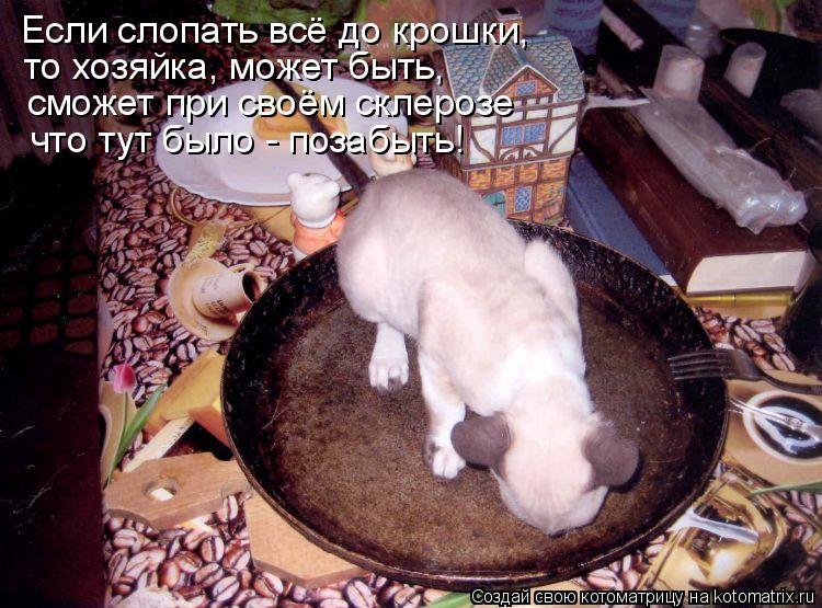 Котоматрица: Если слопать всё до крошки, то хозяйка, может быть, сможет при своём склерозе что тут было - позабыть!