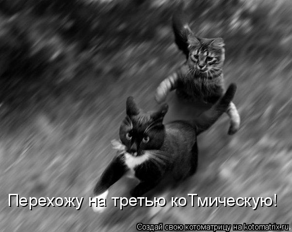 Котоматрица: Перехожу на третью коТмическую!