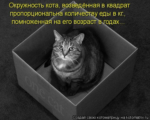 Котоматрица: Окружность кота, возведённая в квадрат  пропорциональна количеству еды в кг., помноженная на его возраст в годах...