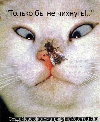 """Котоматрица: """"Только бы не чихнуть!.."""""""