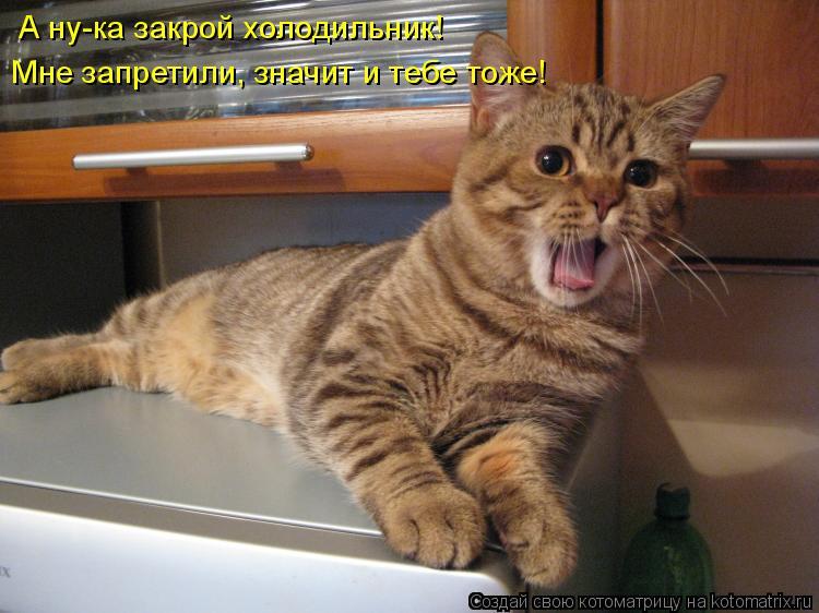 Котоматрица: А ну-ка закрой холодильник! Мне запретили, значит и тебе тоже!