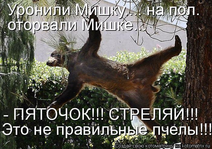 Котоматрица: Уронили Мишку.... на пол. Это не правильные пчелы!!! оторвали Мишке...  - ПЯТОЧОК!!! СТРЕЛЯЙ!!!