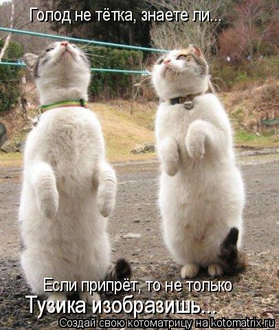 Котоматрица: Голод не тётка, знаете ли... Если припрёт, то не только Тузика изобразишь...