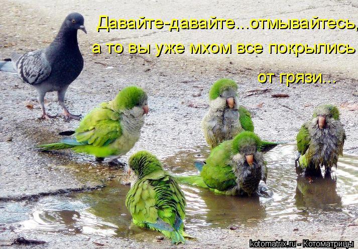 Котоматрица: Давайте-давайте...отмывайтесь, а то вы уже мхом все покрылись  от грязи…..