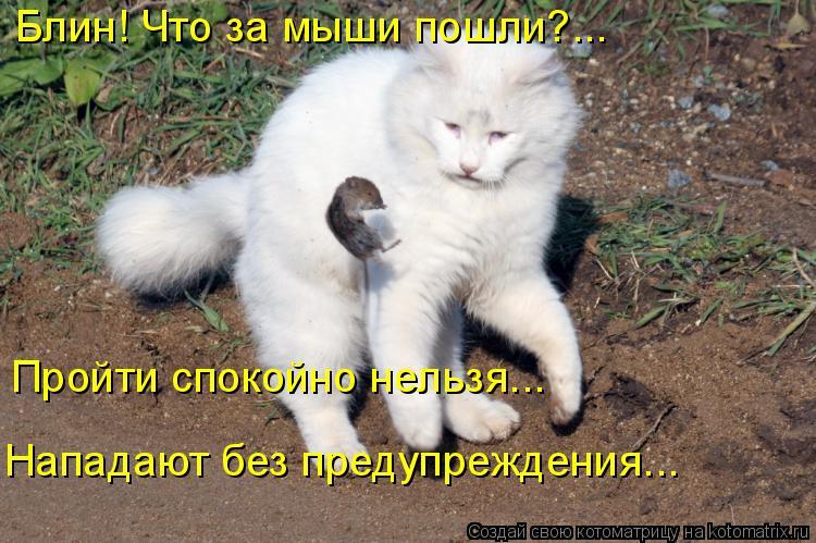 Котоматрица: Блин! Что за мыши пошли?... Пройти спокойно нельзя... Нападают без предупреждения...