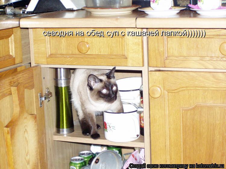 Котоматрица: севодня на обед суп с кашачей лапкой)))))))