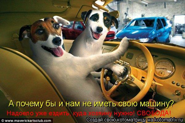Котоматрица: А почему бы и нам не иметь свою машину?  Надоело уже ездить, куда хозяину нужно! СВОБОДА!