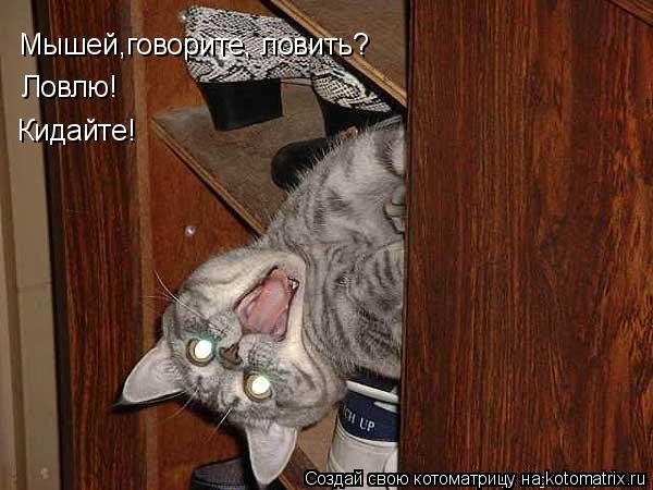 Котоматрица: Мышей,говорите, ловить? Ловлю! Кидайте!